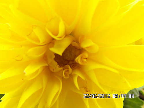 fleurs-22-Mai-020.JPG