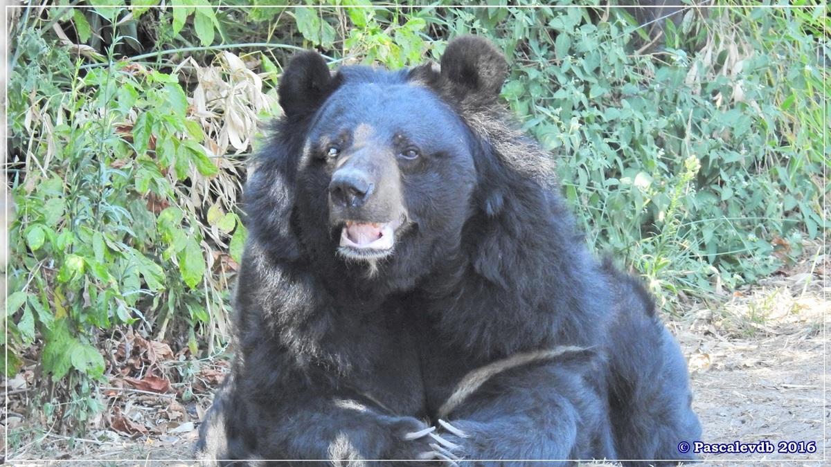 Zoo du Bassin d'Arcachon - Août 2016 - 10/15