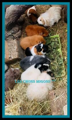 Aux Chons Mignons  !!!!