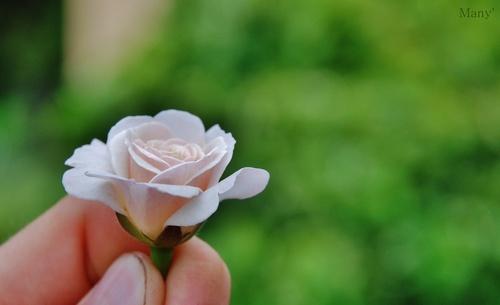 Rose/Pink'