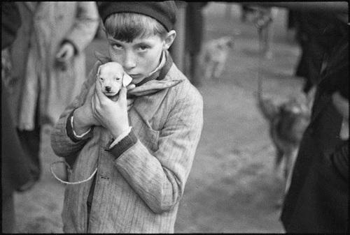 Des chiens en photos