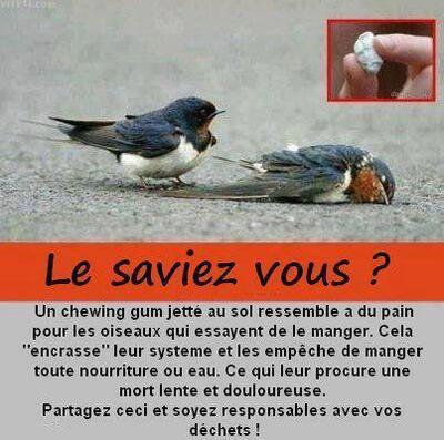 Saviez-vous qu'un chewing-gum peut tuer un oiseau ?