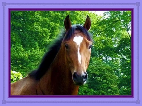L'homme qui murmure aux oreilles des chevaux