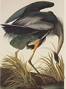 John-James-Audubon-Great-Blue-Heron-43855