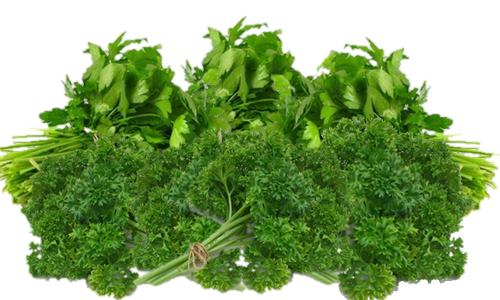 Vertus médicinales des légumes et des fruits : PERSIL