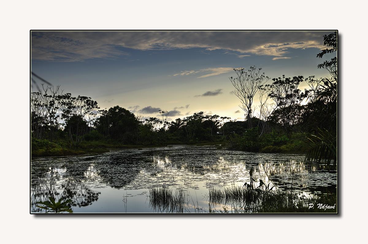 L'étang des nénuphars