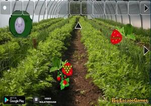 Jouer à Big Strawberry farm fairy escape
