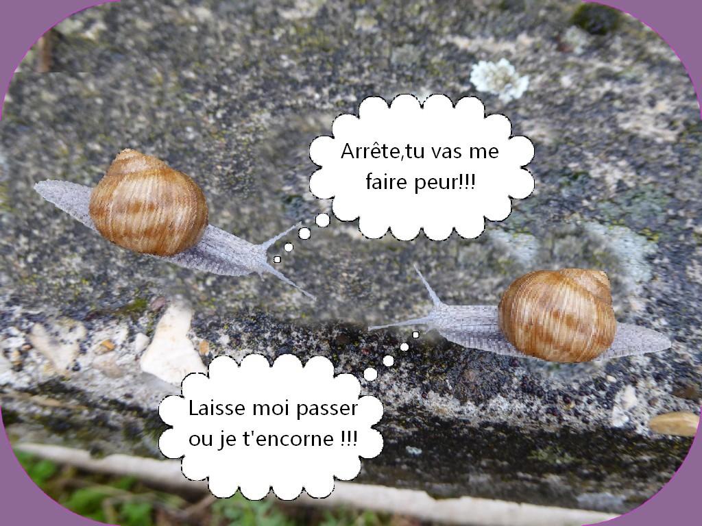 PETITE PAGE D'HUMOUR