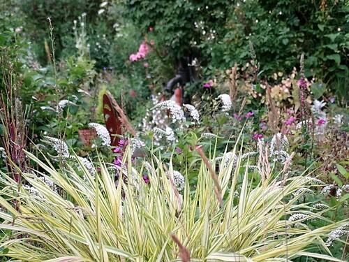 Le jardin en juillet