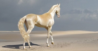 Le cheval d'or ...