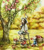 Pommes flétries pommes rétrécies