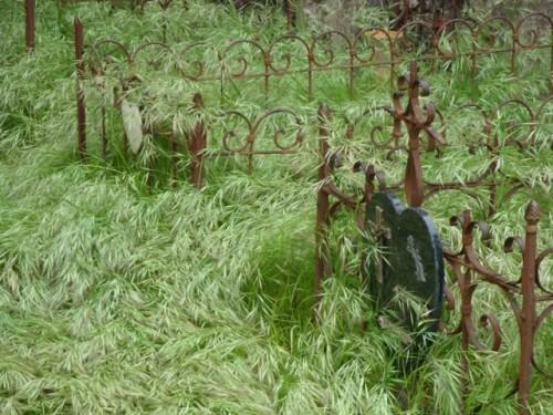 vieux cimetière abandonné 8579