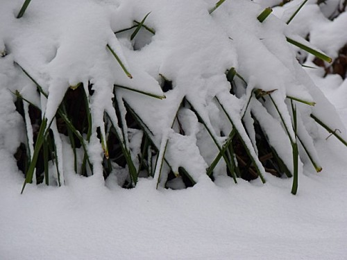 Promenade hivernale 011