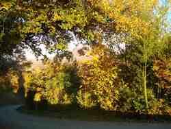 Autour du grand chêne blanc du Péage / commune d'Auriples-La Répara : bambous, cornouillers et Roche Colombe en fond,  le 1er novembre 2015 ;
