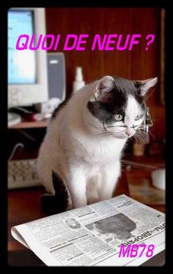Chat fait frisquet ....