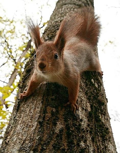 ecureuil.png