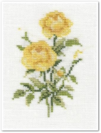 Les roses de Vervaco 2