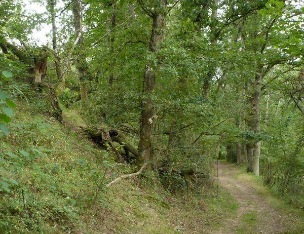 Vers-cascades-des-Moulines-03.jpg