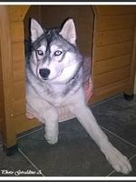 Louska (5 mois)