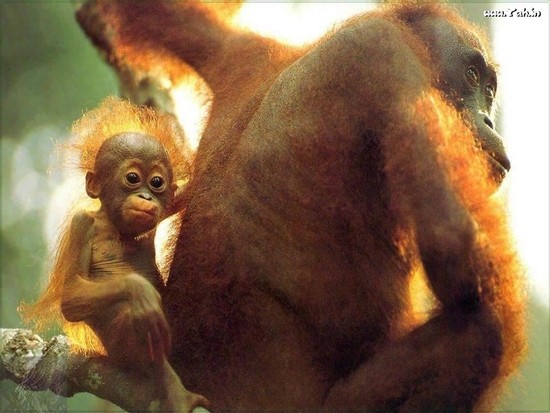 child_monkey_with_mother_13