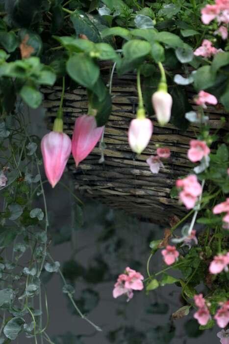 Hanging baskets 2013 : bilan (1/7)
