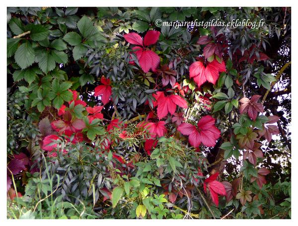 Equinoxe d'automne - Equinoxe of automn