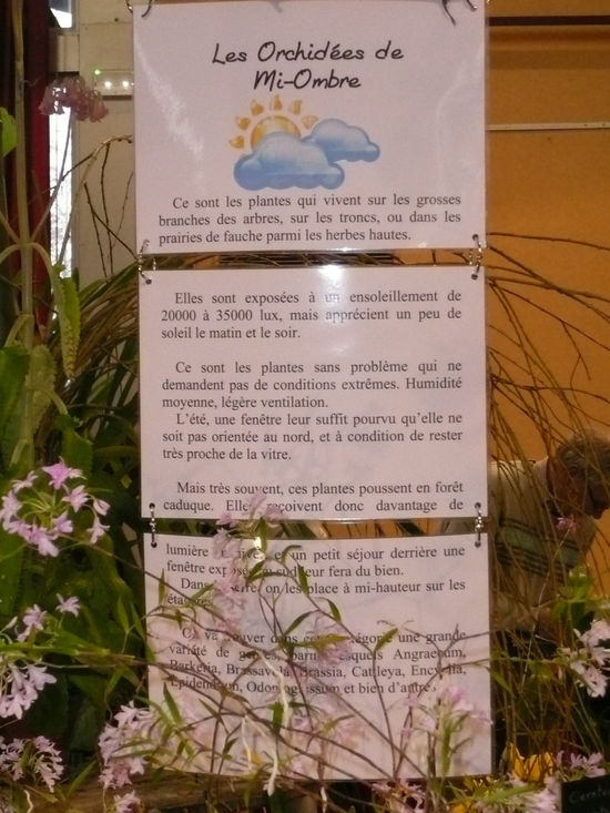 2013-Expo orchid Pont sainte Marie 019