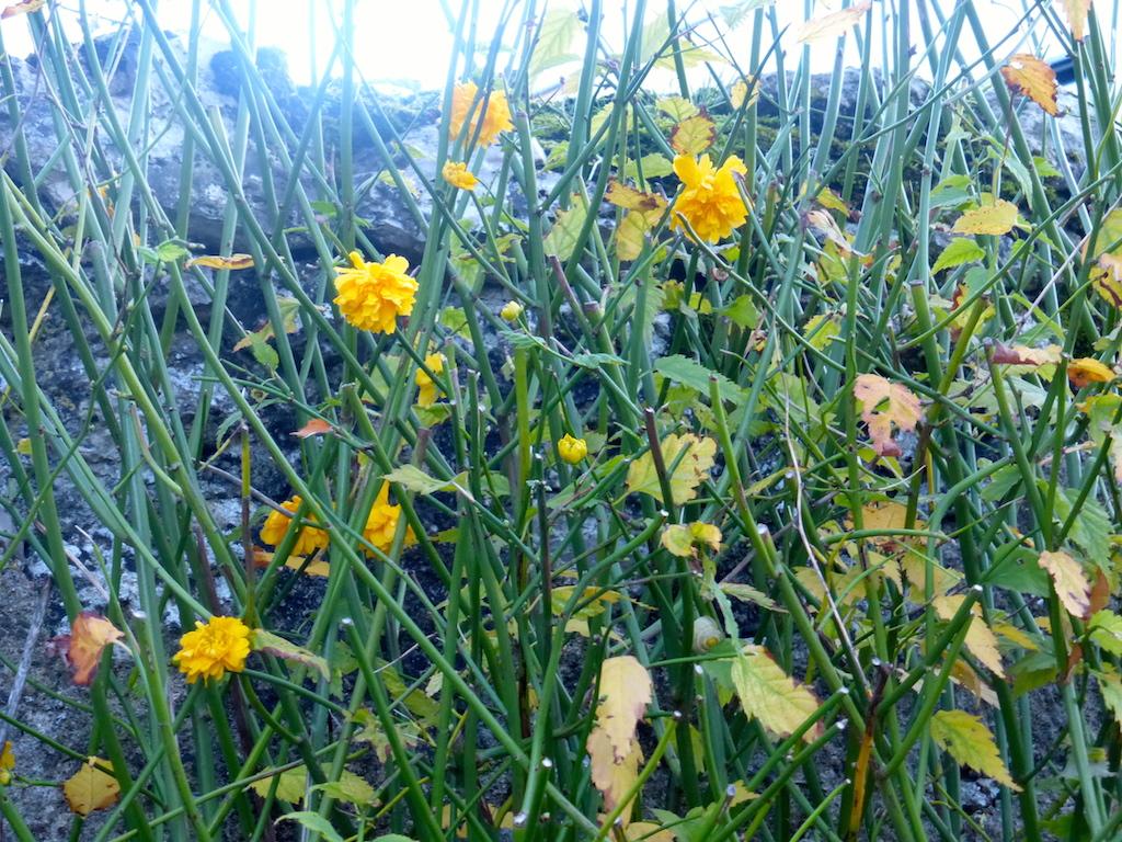 PAUSE et pour vous faire patienter: quelques fleurs lors d'une promenade dimanche dernier!