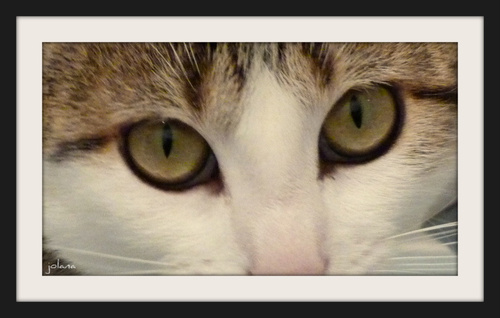 yeux nina