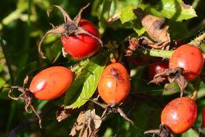 Passage obligé pour les insectes de l'été à l'automne