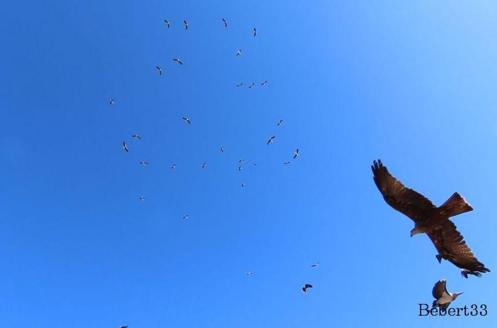 les oiseaux au Puy du Fou -2