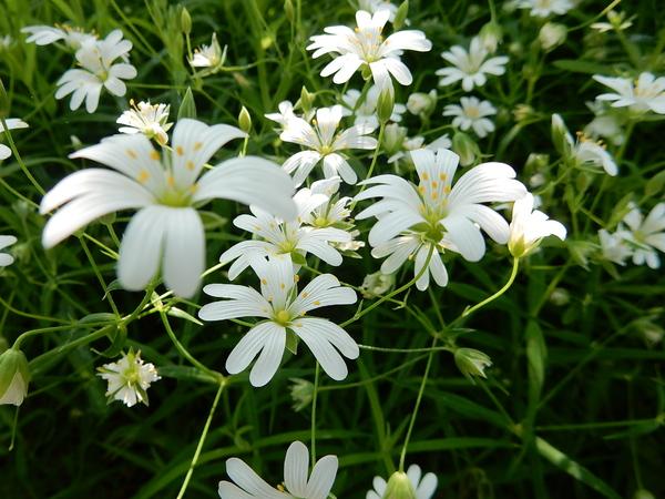 Fleurs du jardin Massart
