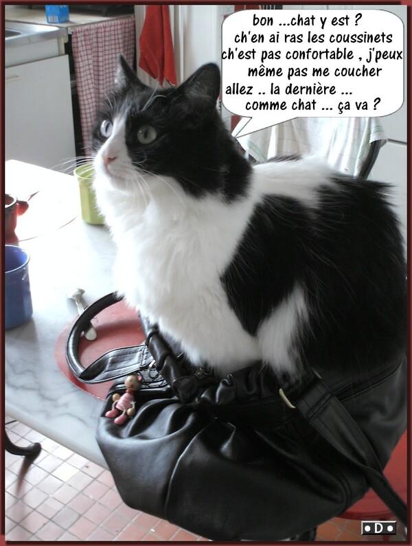 Chat ....dans le sac !