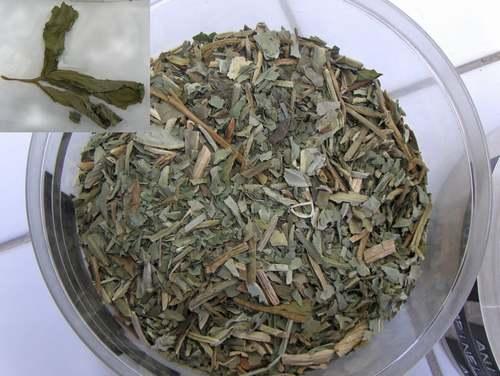 Vertus médicinales des plantes sauvages : Ményanthe