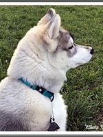 Laïka (4,5 mois)