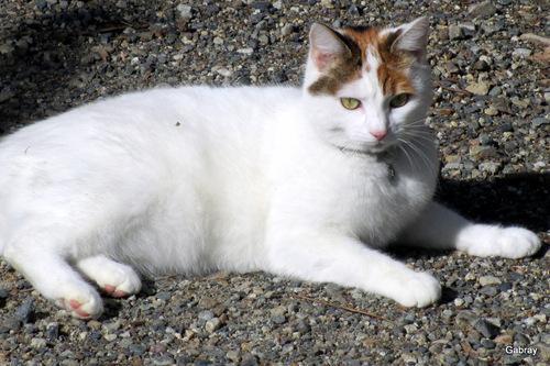 Le beau compagnon: un chat!
