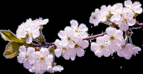 Fleurs en Branches Série 10