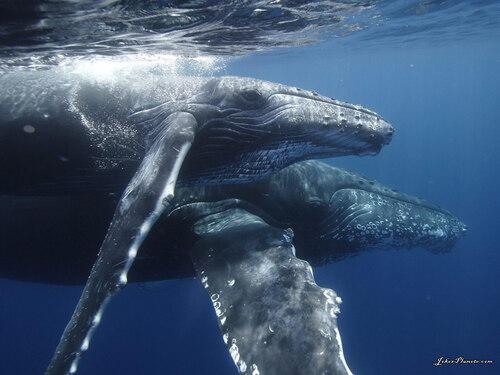 Enquête Sur Le Chant Des Baleines
