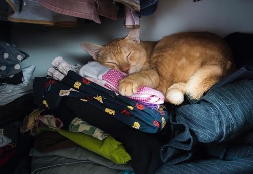 Pourquoi mon chat dort-il sur mes vêtements ?