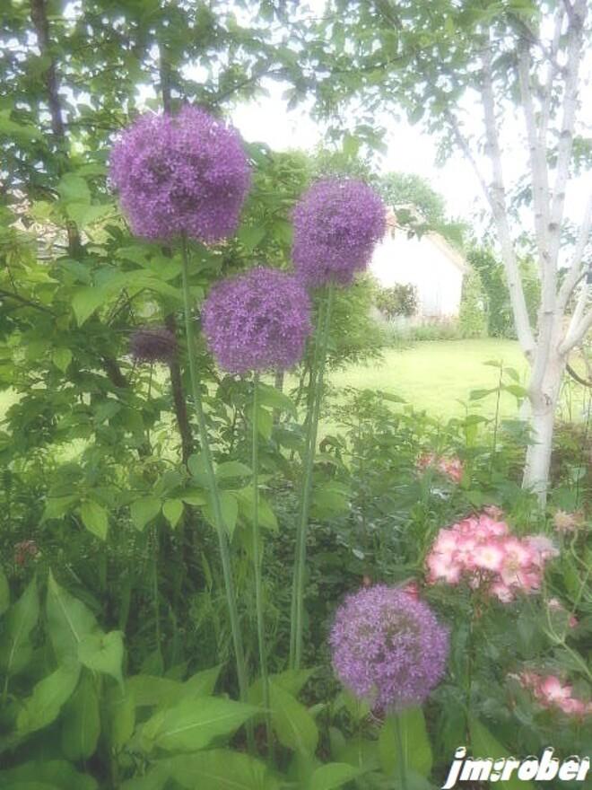 Un après-midi de visite au Jardin, un peu chez les autres (2/2)
