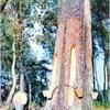gommage les pins landes