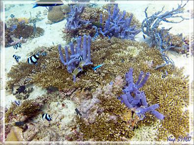 Elles nous en font voir de toutes les couleurs et sous toutes les formes : les éponges ! - Spot Les 2 Sœurs - Tsarabanjina - Archipel Mitsio - Madagascar
