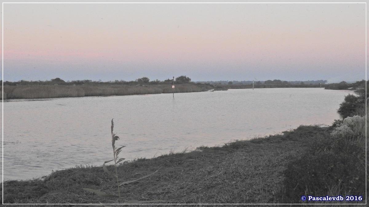 Réserve ornitho du Teich - Octobre 2016 - 10/11