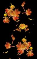 *** Les feuilles mortes du 05_10_2018 ***