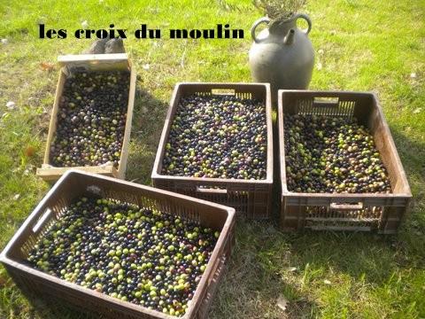 Toussaint 2011+olives 081