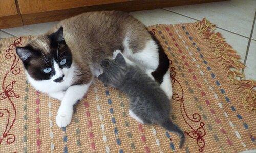 Quand Miky tétait encore sa mère !