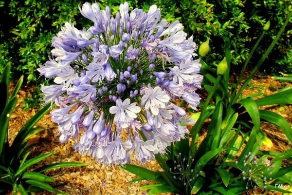 L12---La-fleur.JPG