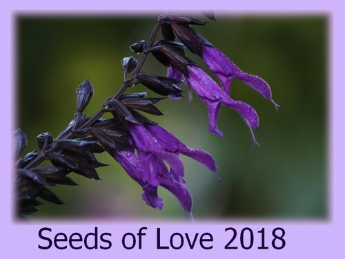 Seeds of Love 2018 - ma sélection