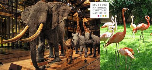 """Samedi 26 novembre 2016: Sortie culturelle """"Muséum national d'histoire naturelle"""""""