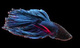 tubes poissons02